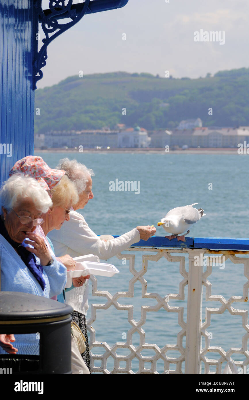 Four female pensioners eating take away fish and chips on Llandudno Pier in North Wales on a bright sunny day - Stock Image