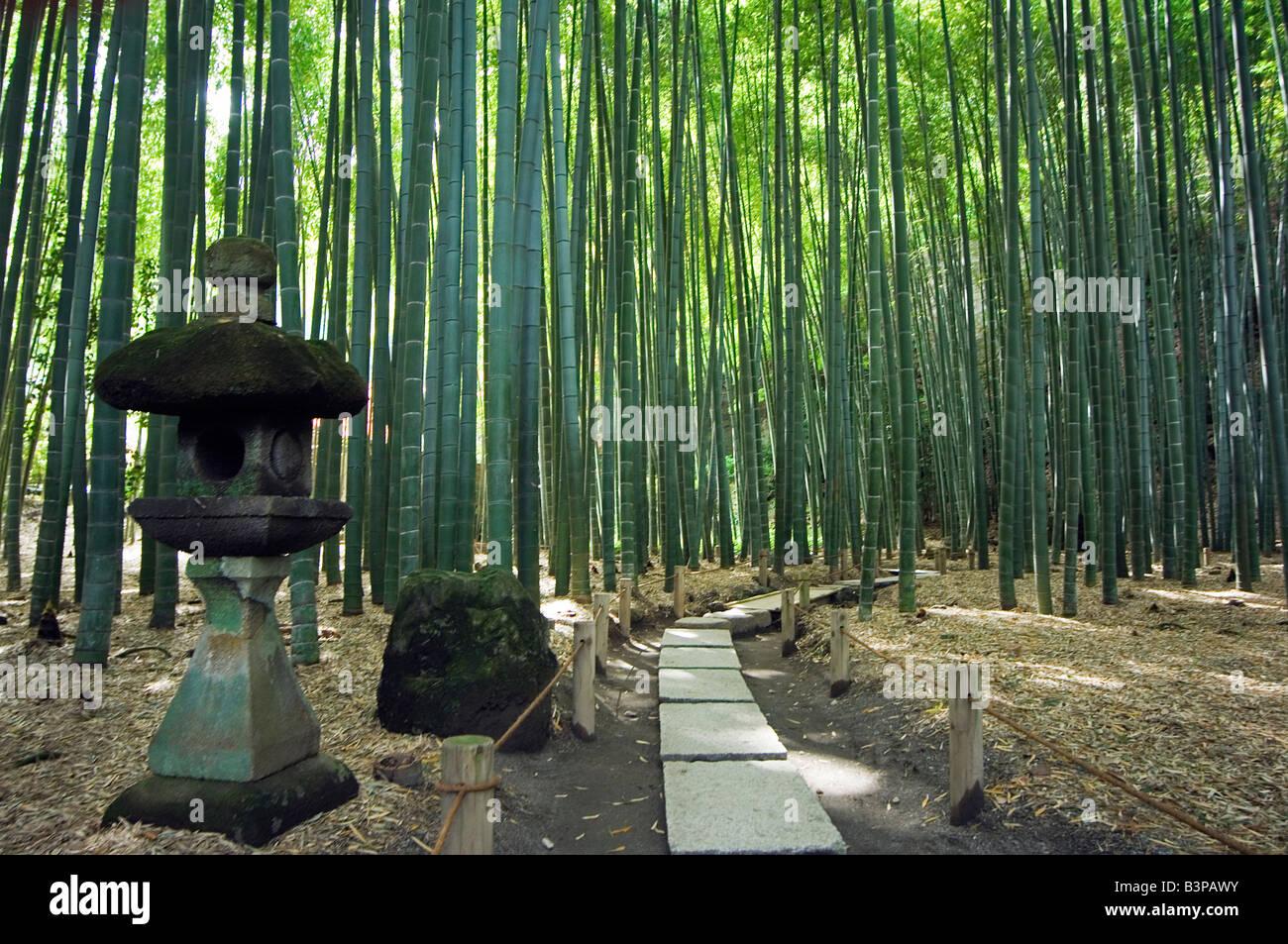 Japan, Kanagawa prefecture, Kamakura. Kamakura bamboo forest and stone lantern in Hokokuji temple garden - Stock Image