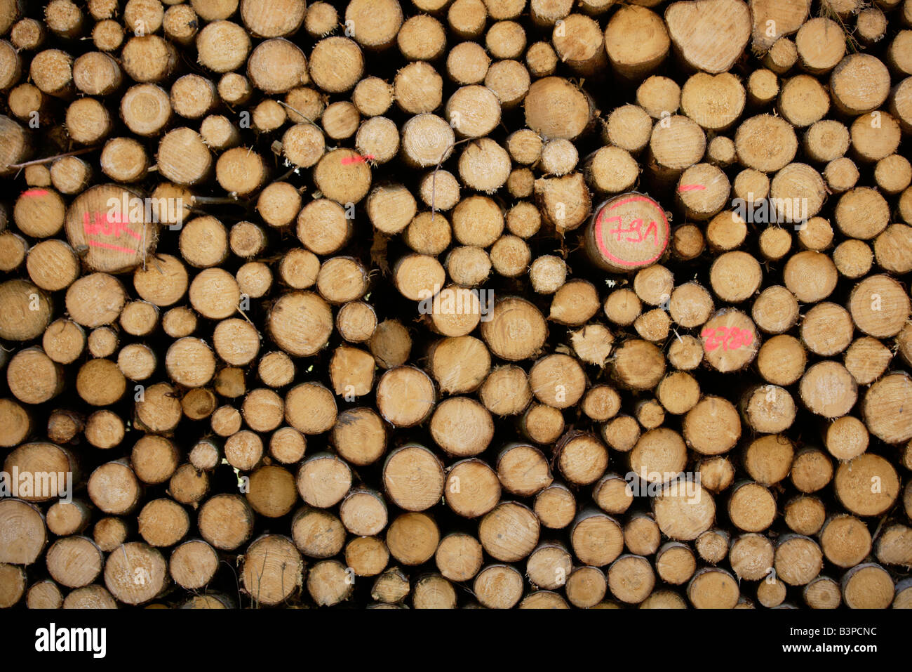 Germany, Bavaria, Upper Bavaria, Stack of sawn timber, full frame - Stock Image
