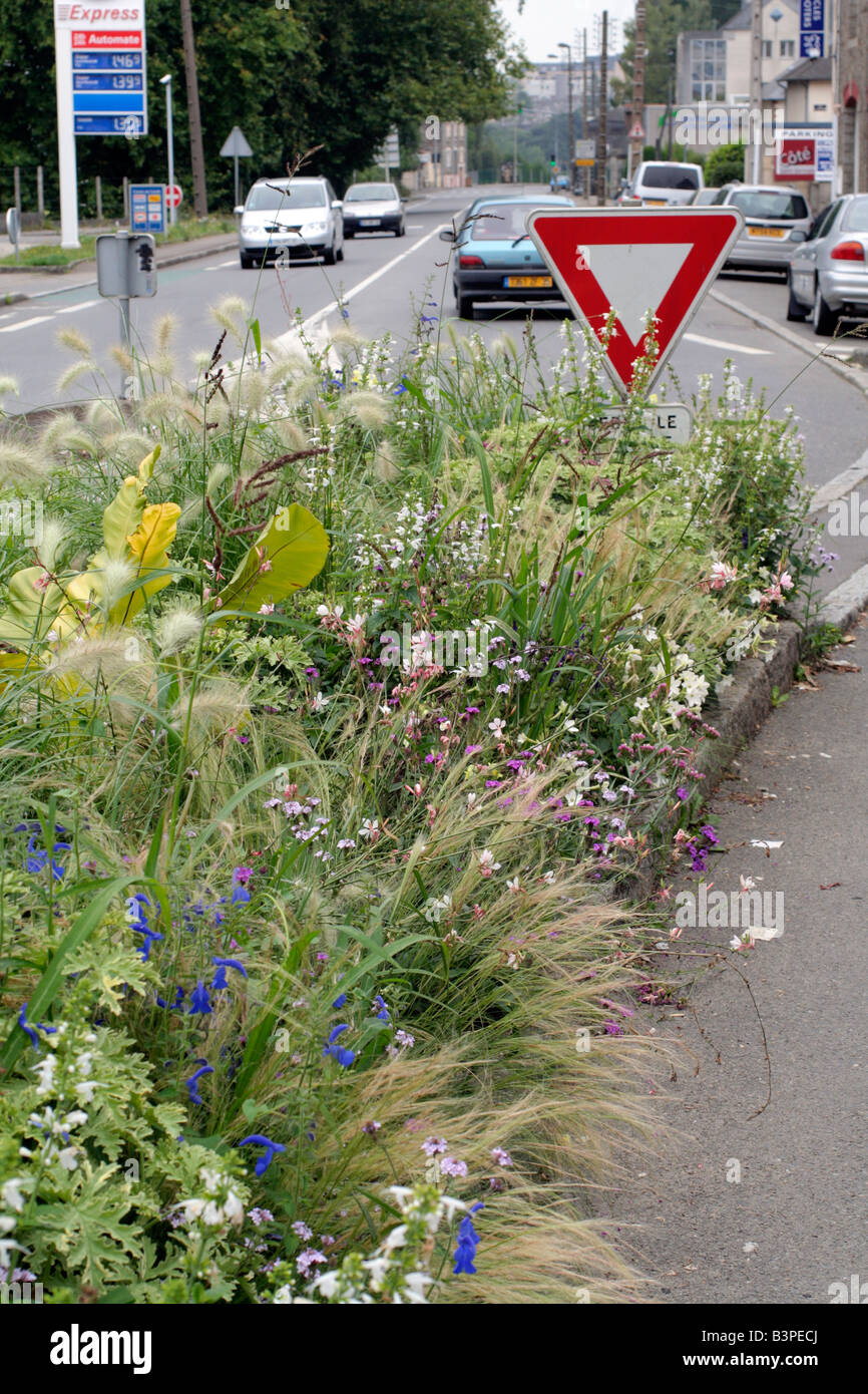 MUNICIPAL AMENITY PLANTINGS AT ST JAMES, MANCHE 50 USING GAURA LINDHEIMERI SALVIA PATENS PENNISETUM VILLOSUM NICOTIANA - Stock Image