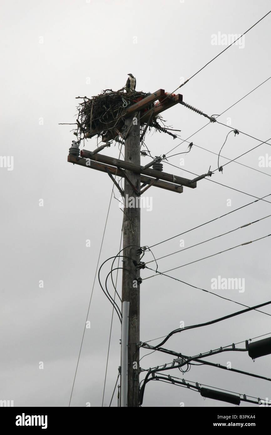 Telephone Pole Stock Photos & Telephone Pole Stock Images