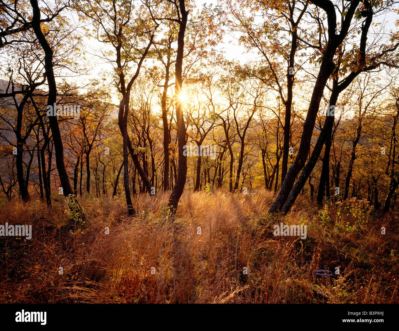 SETTING SUN ON AUTUMN LEAVES, MT. TAMMANY, WORTHINGTON STATE FOREST, DELAWARE WATER GAP, NEW JERSEY, USA - Stock Image
