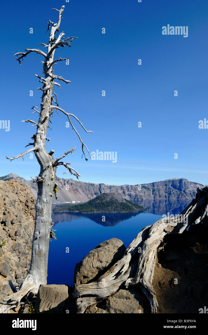 Dead trees stand on the rim of the Crater Lake. The Crater Lake National Park, Oregon, USA. Stock Photo