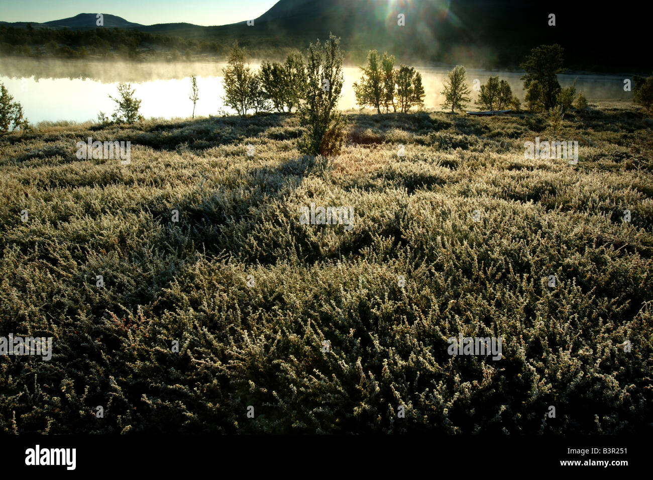Sunrise and first autumn frost at Fokstumyra nature reserve at Dovrefjell, Dovre kommune, Norway. - Stock Image