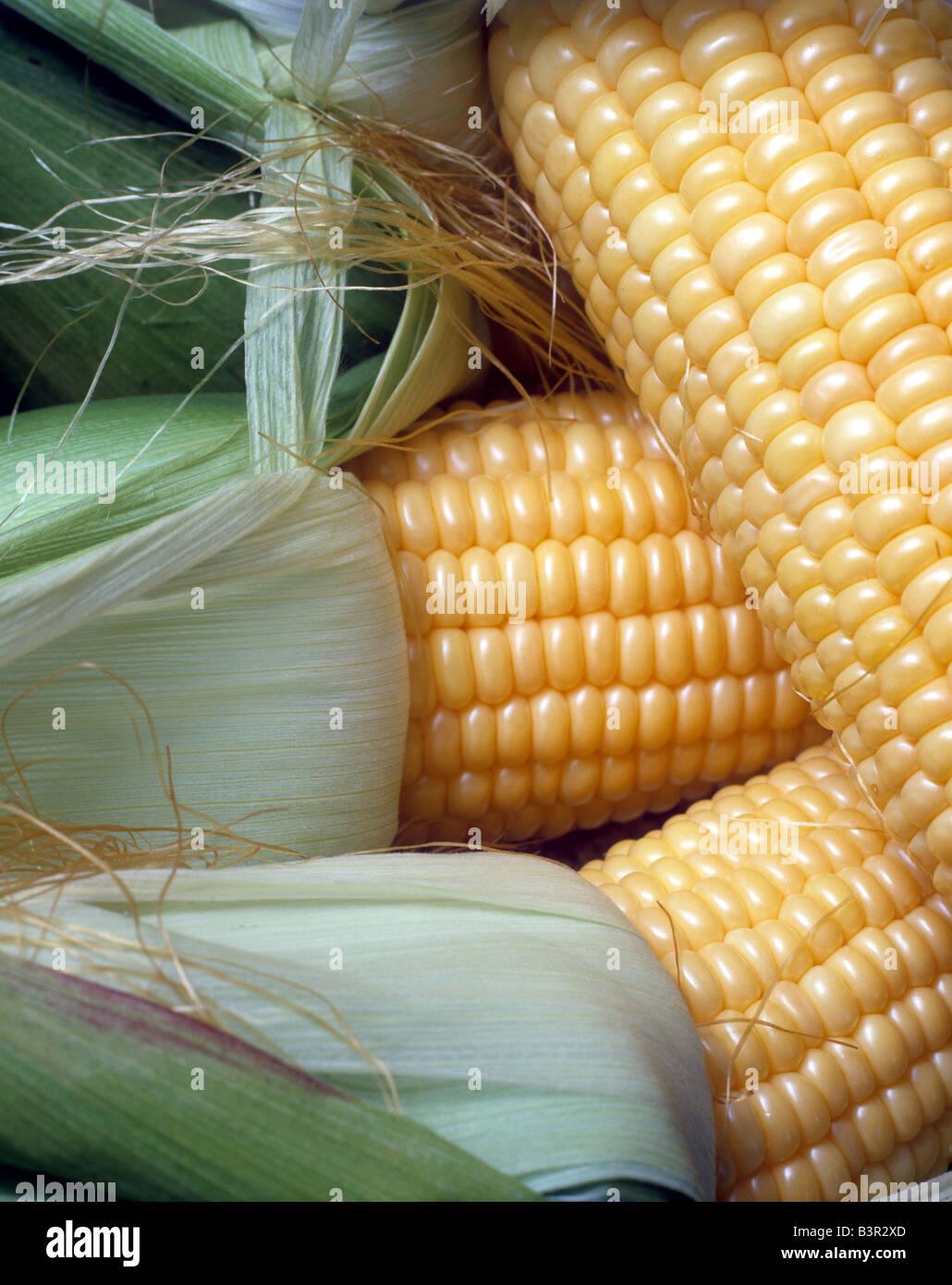 Ears of fresh corn - Stock Image