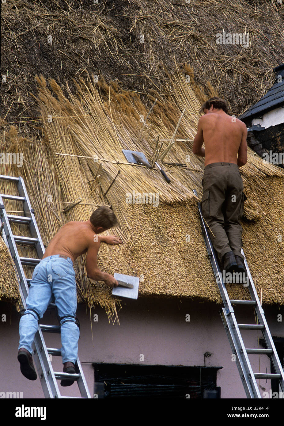 Young trainee thatchers fastening and shaping Reed on a cottage roof - Stock Image