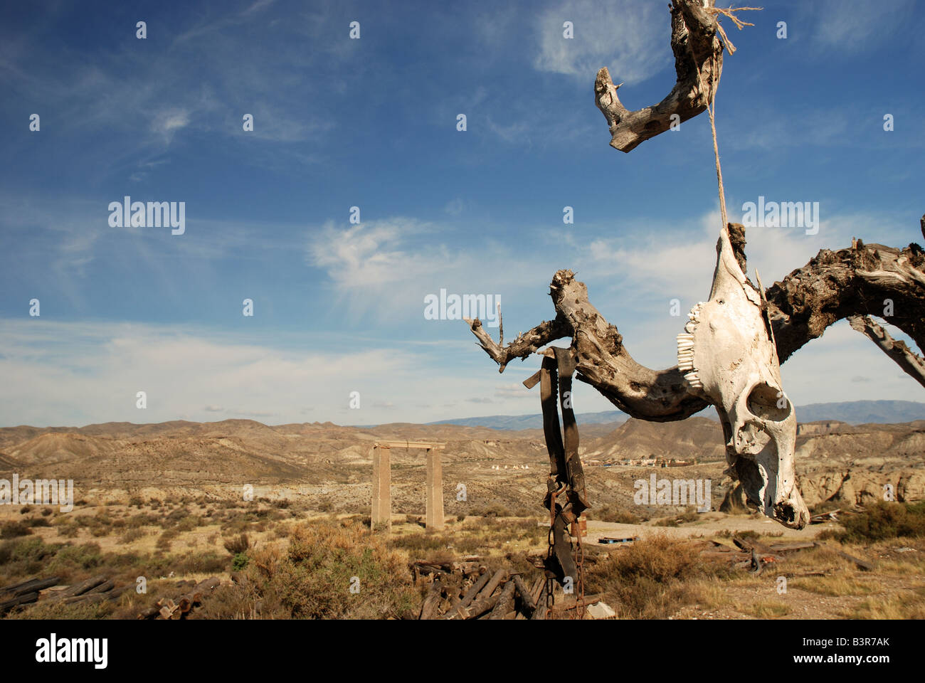 Parched tree in the desert landscape - Stock Image