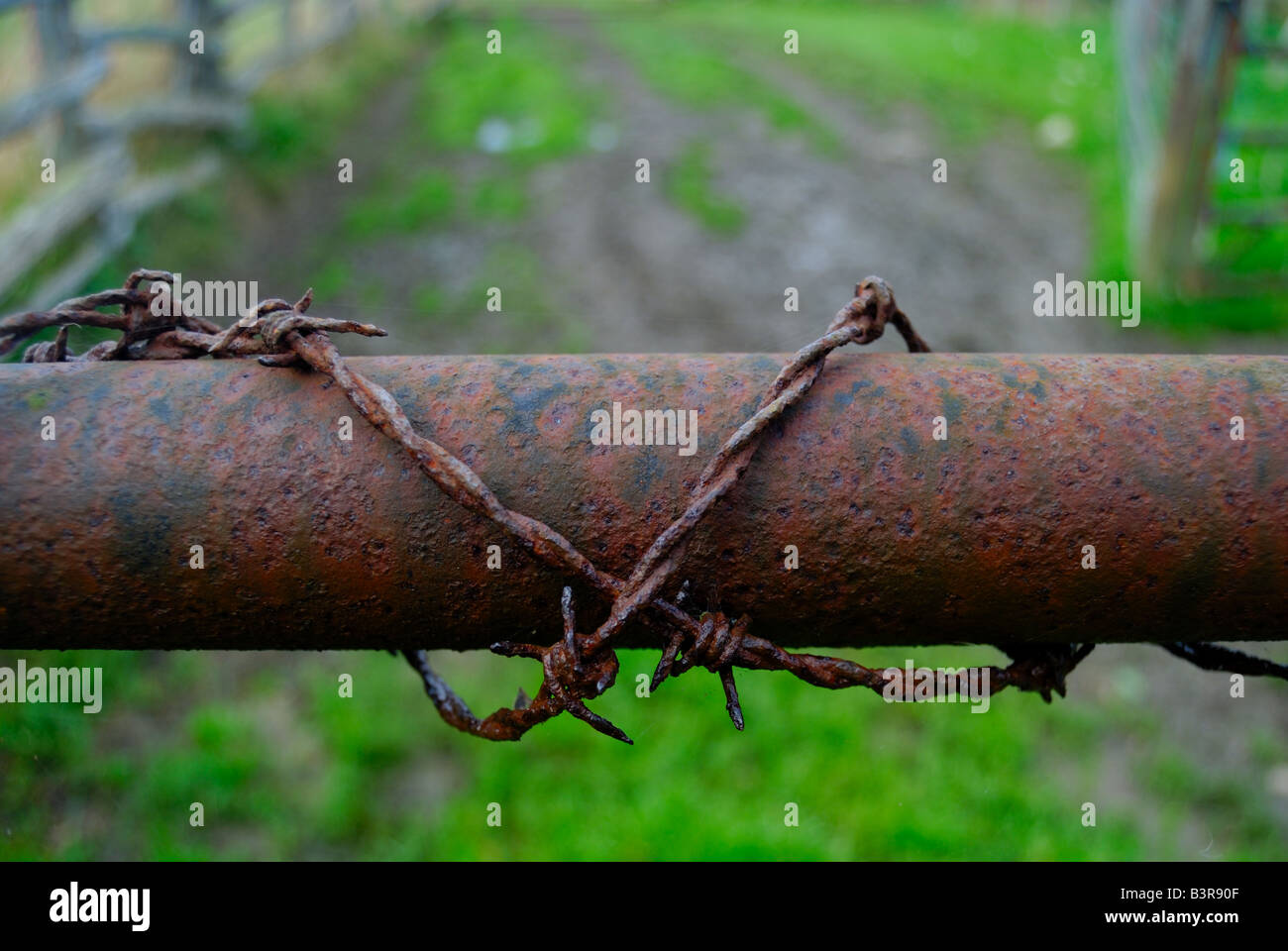 Barb wire on a tube - Stock Image
