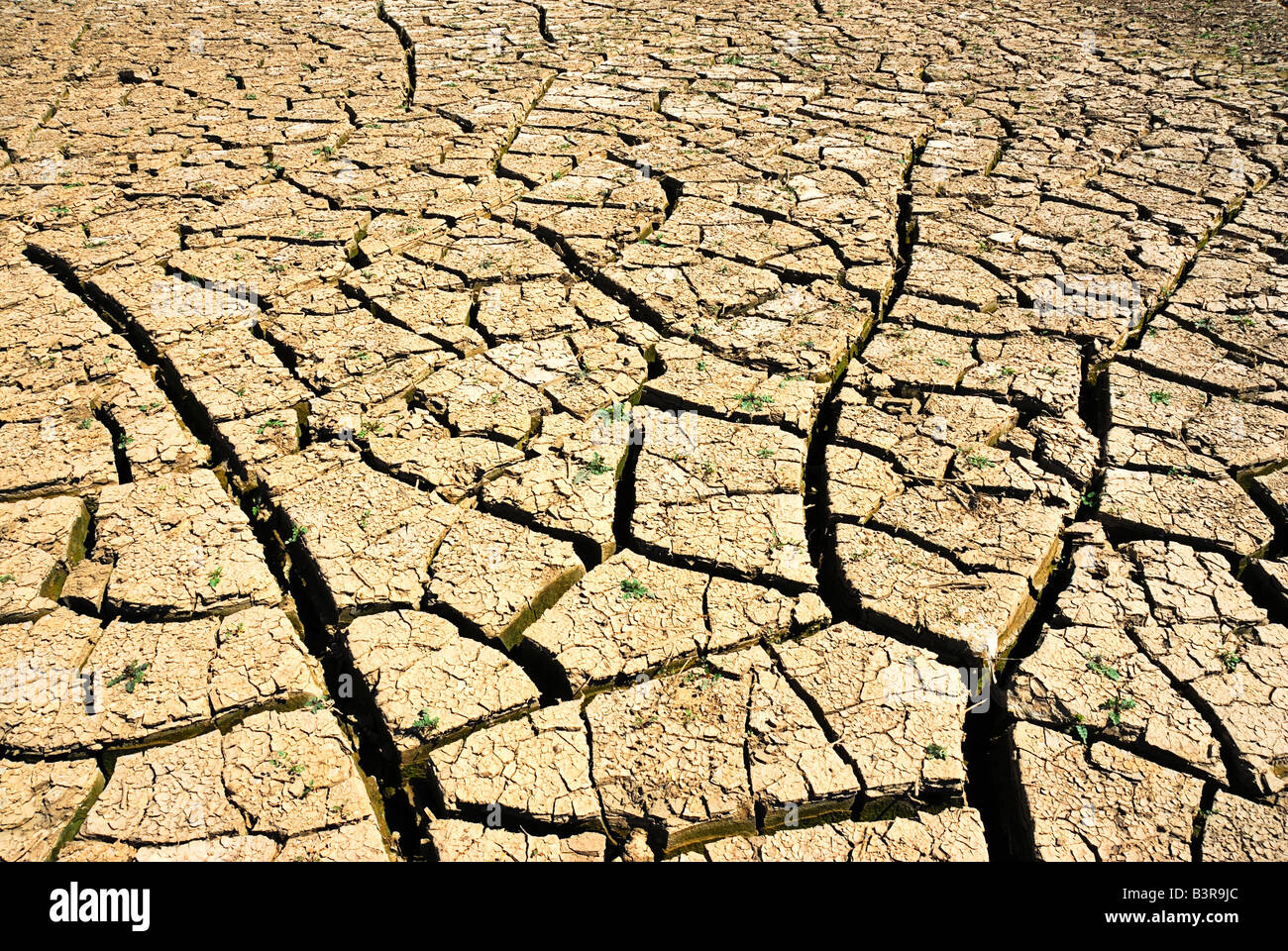 dry river - Stock Image