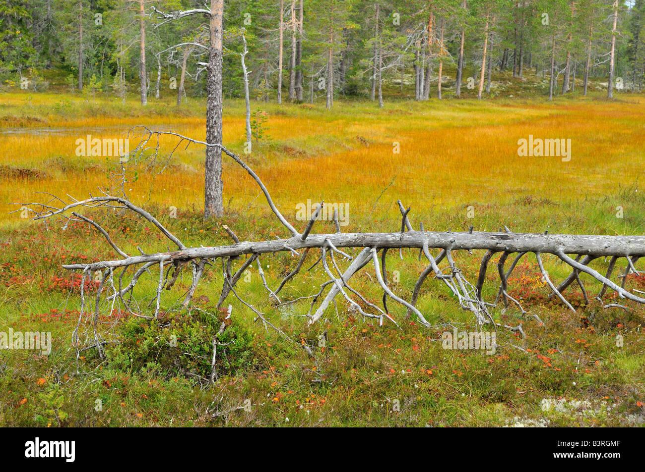 Colorful marsh landscape, Sweden - Stock Image