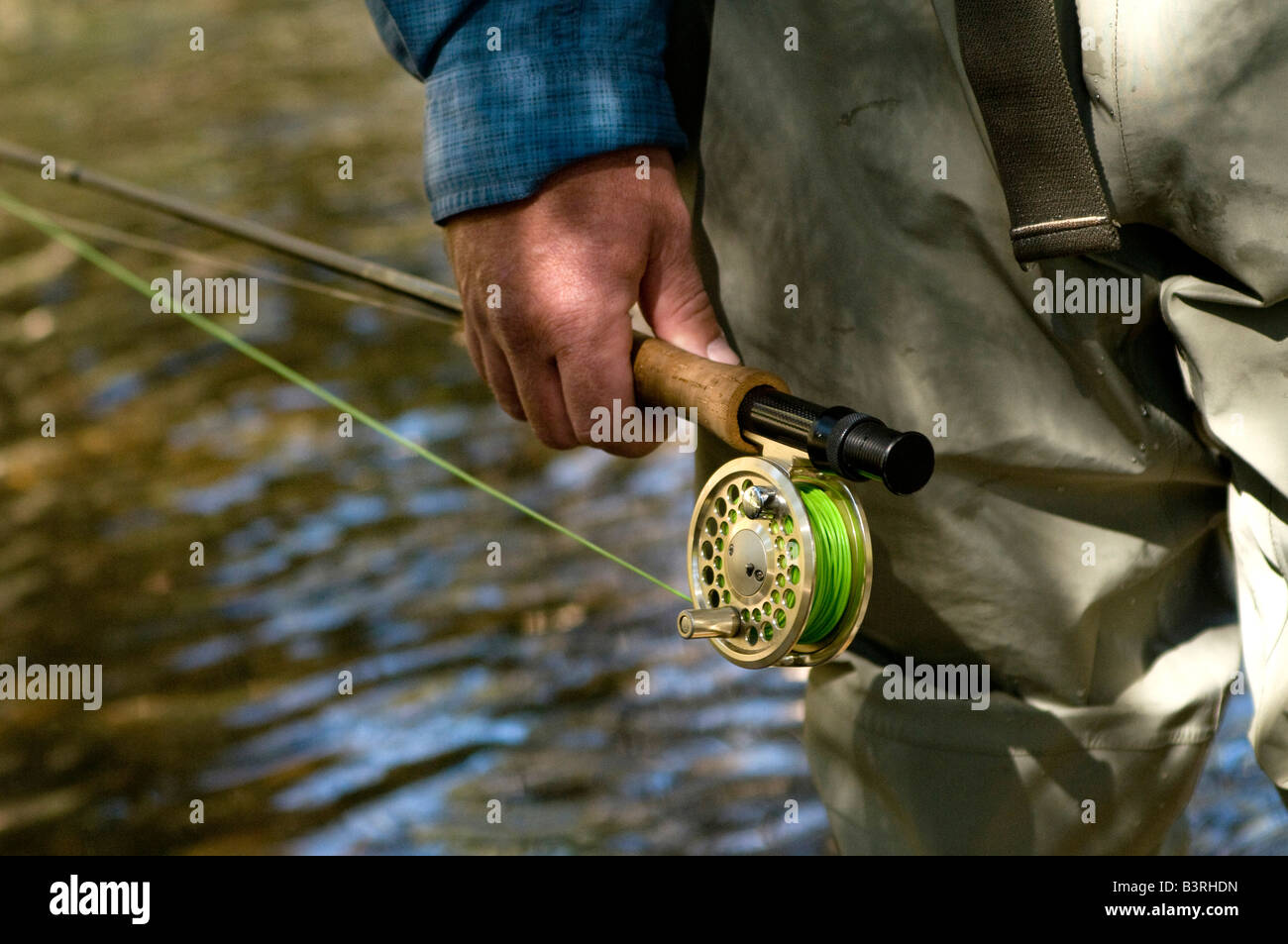 Local resident fly fishes for trout on Gore Creek, Vail, Colorado in August. Stock Photo