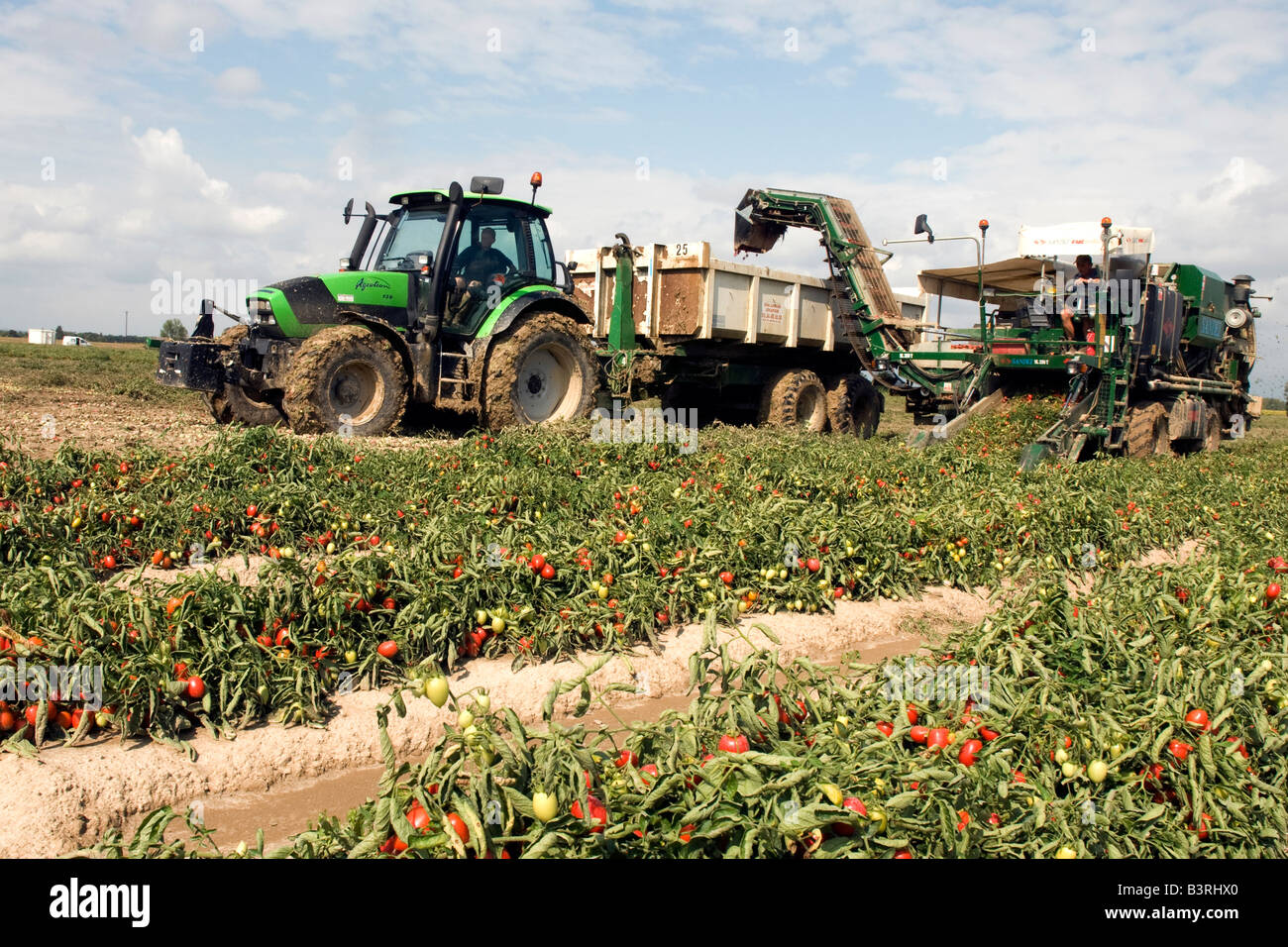 Totally mechanized harvest of tomatoes for factory processing in southwest France - Stock Image