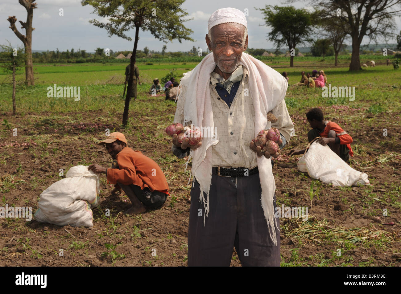 Farmer Sunir Sushreta with his oinion crop in Mareko Woreda Southern Ethiopia - Stock Image