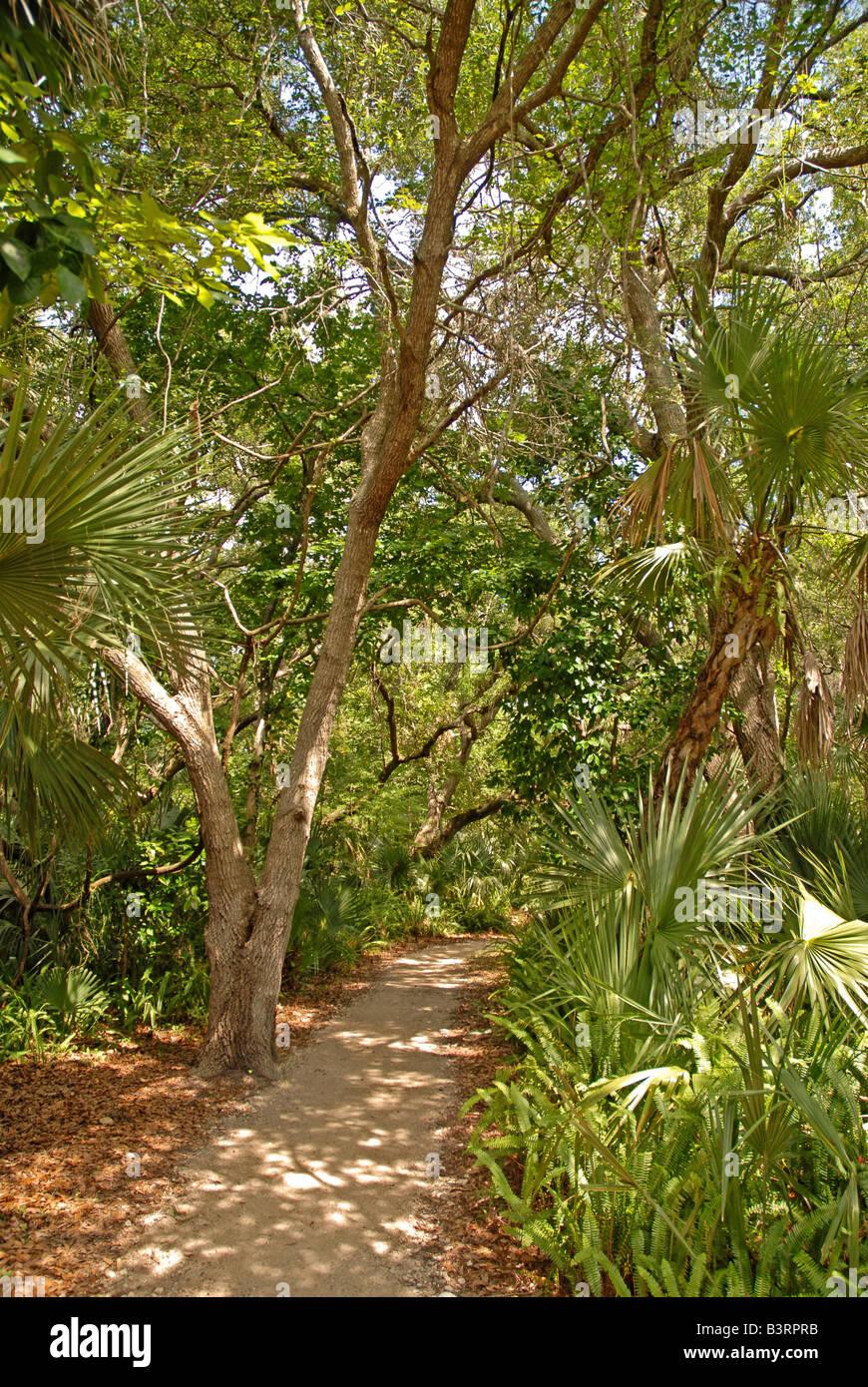 Florida hiking trail florida hikes Gold Head Branch State Park fl fla - Stock Image
