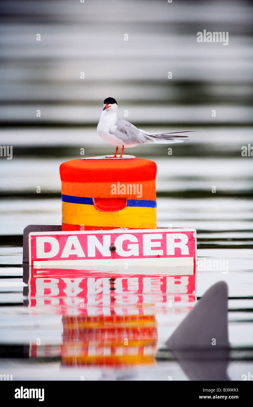 Seagull on buoy with danger sign with shark fin passing by Stock Photo