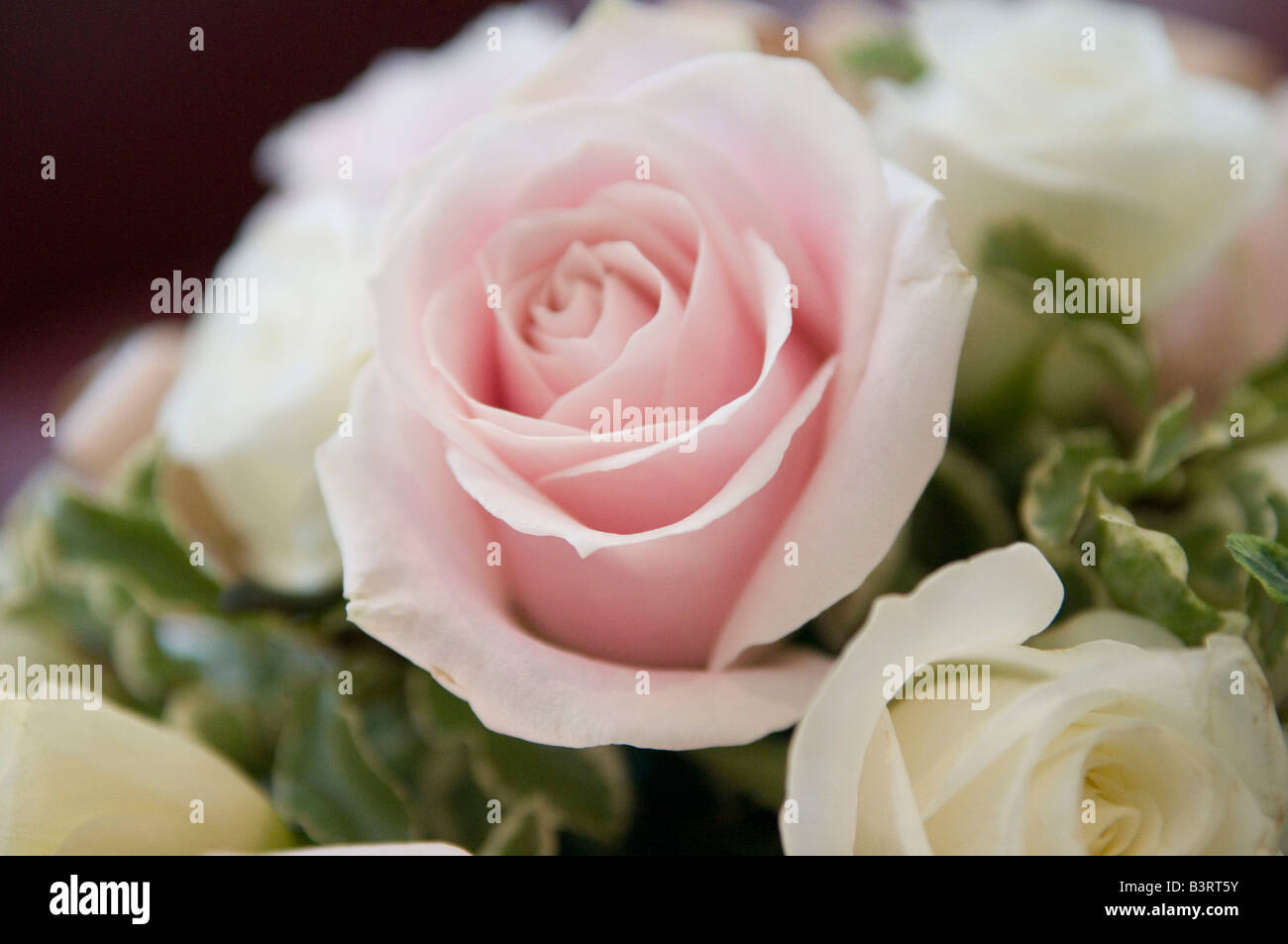 rose roses flower flowers florist floristry bouquet flower bouquets wedding weddings romance romantic show of affection - Stock Image