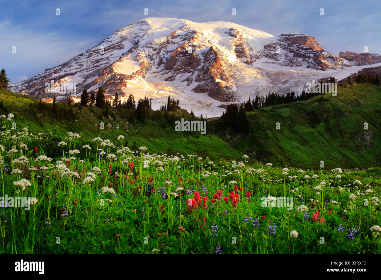 Wildflower meadow at Paradise, Mount Rainier, Washington, USA - Stock Image
