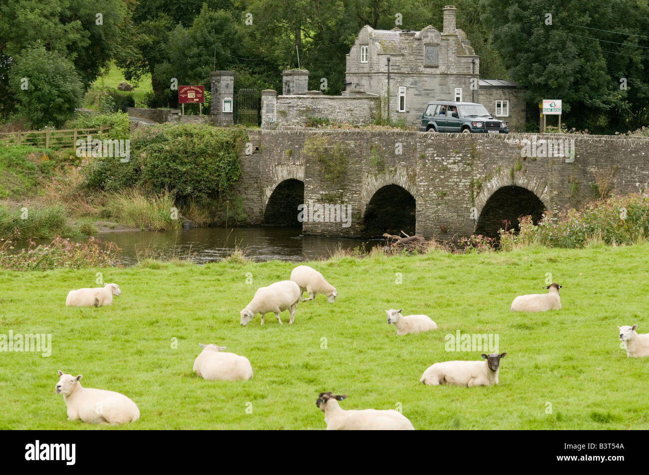 The old stone bridge over the river Teifi at Llechryd Ceredigion Wales uK, with sheep grazing in the field in front Stock Photo