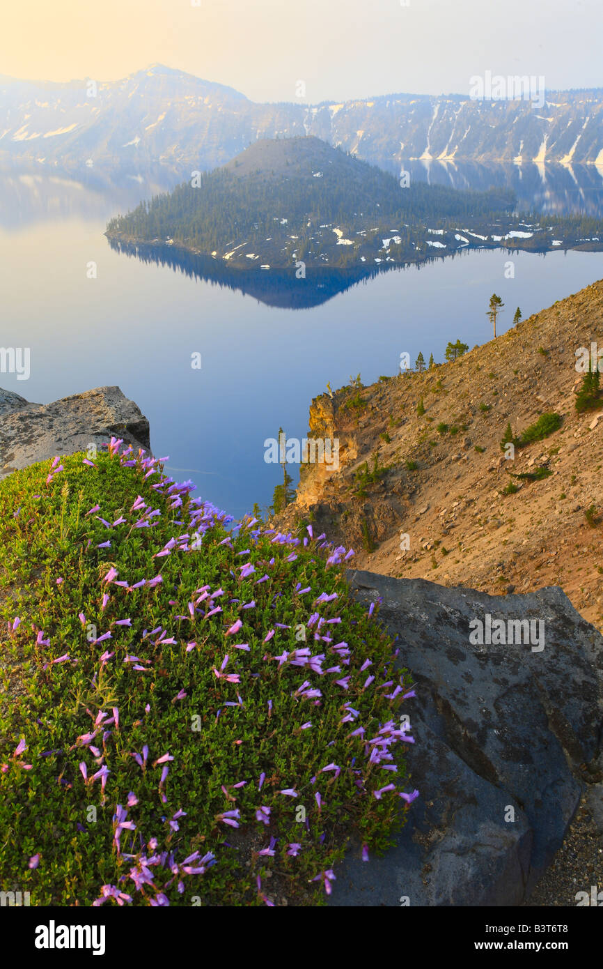 Wildflowers at rim of Crater Lake, Oregon, at sunset - Stock Image