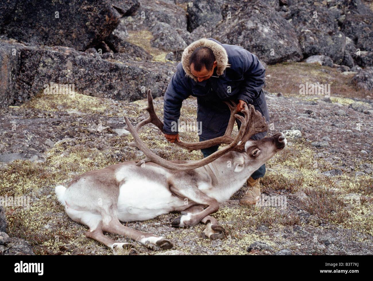 Inuit Eskimo Man And A Freshly Killed Caribou Baffin Island Nunavut Canada