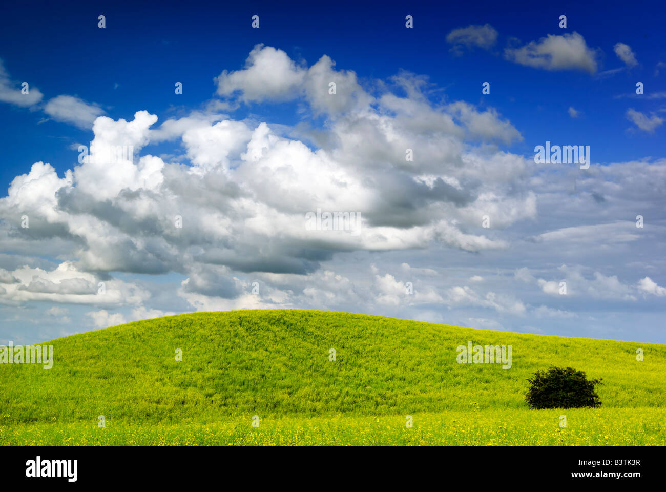 Summer landscape - saturated view of meadow. Europe, Poland. Adobe RGB (1998). Stock Photo