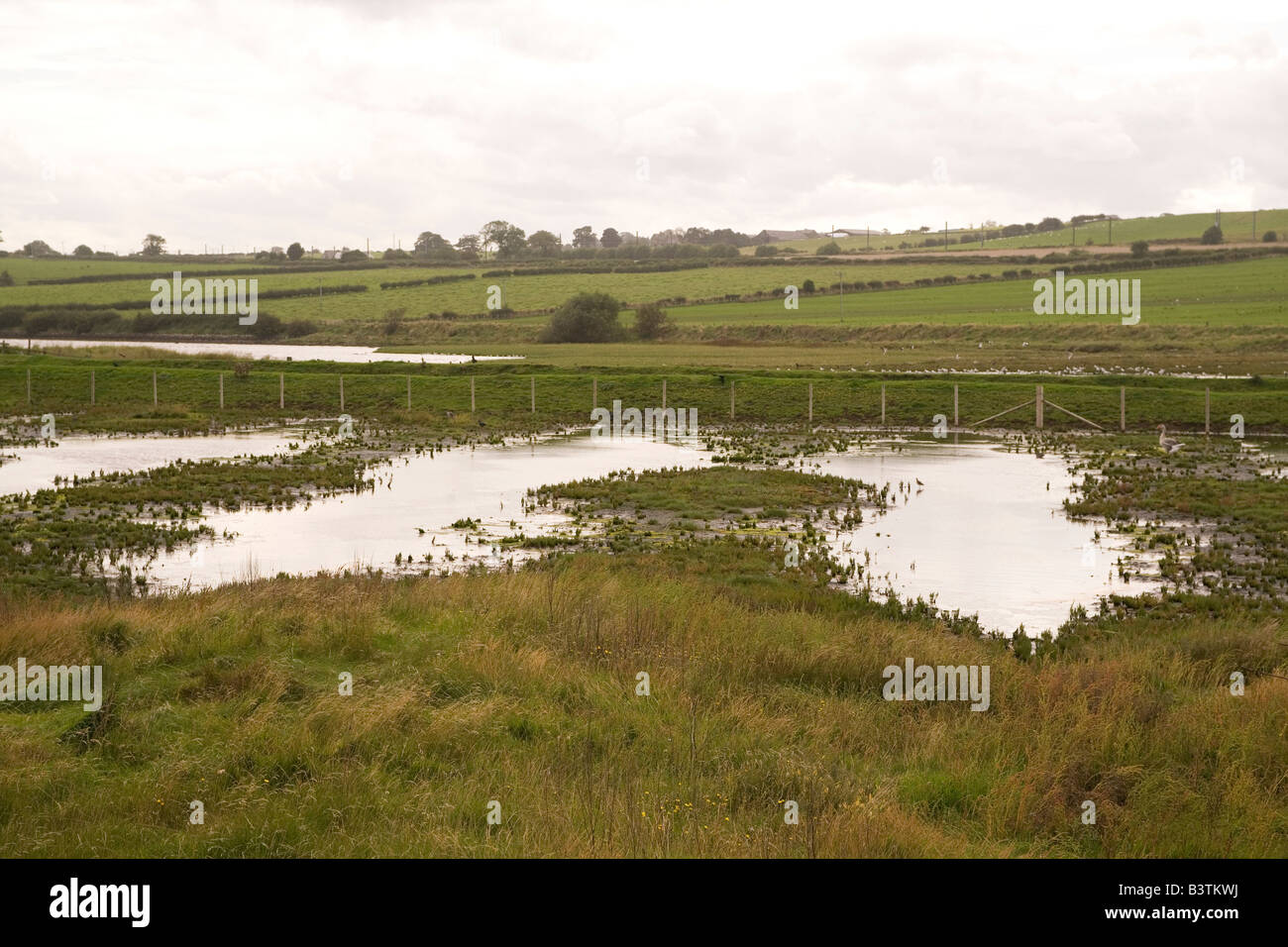 A waterlogged field close to Alnmouth in Northumberland, after the severe flooding experienced in the summer of Stock Photo