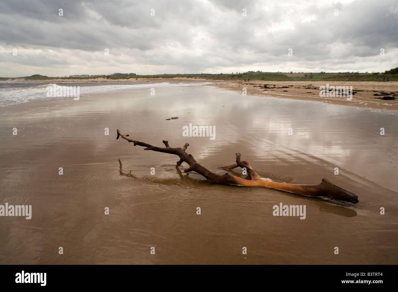 Driftwood has been washed onto Alnmouth beach in Northumberland. The sky is dark and overcast. - Stock Image