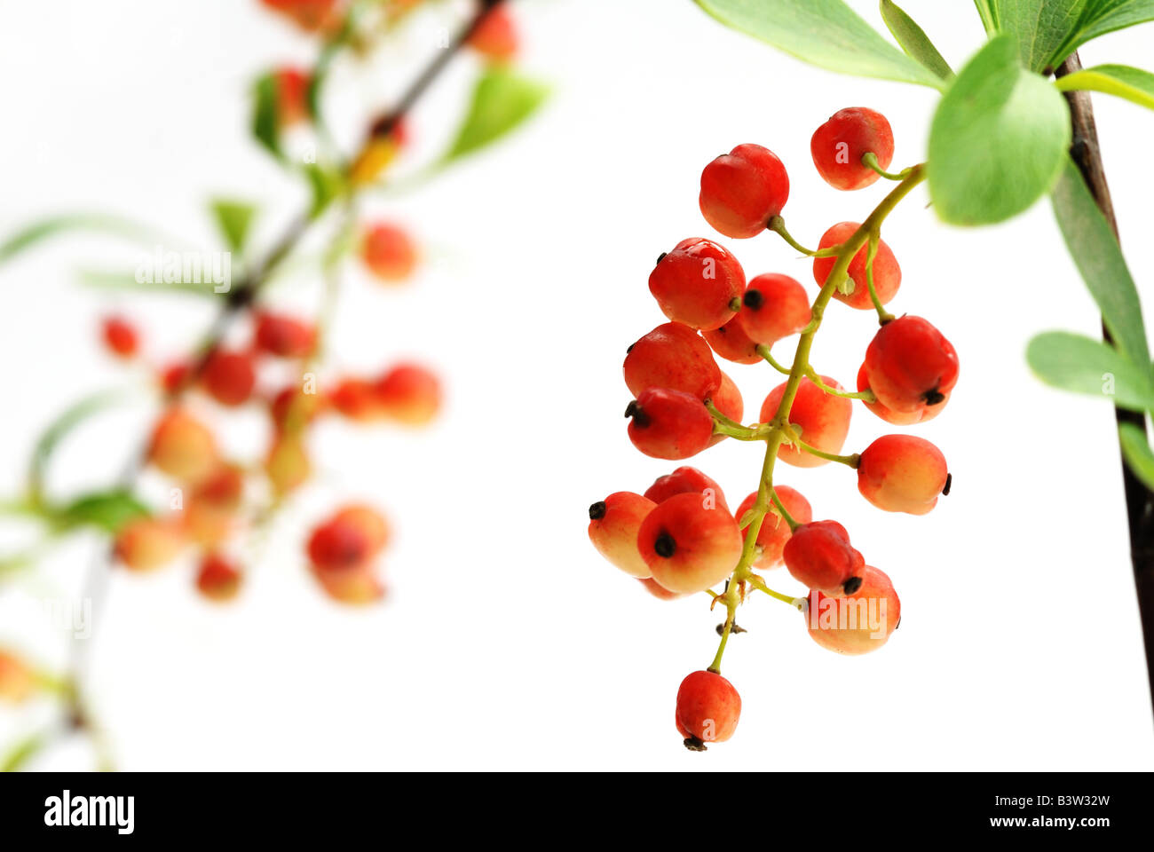 red fruits - Stock Image