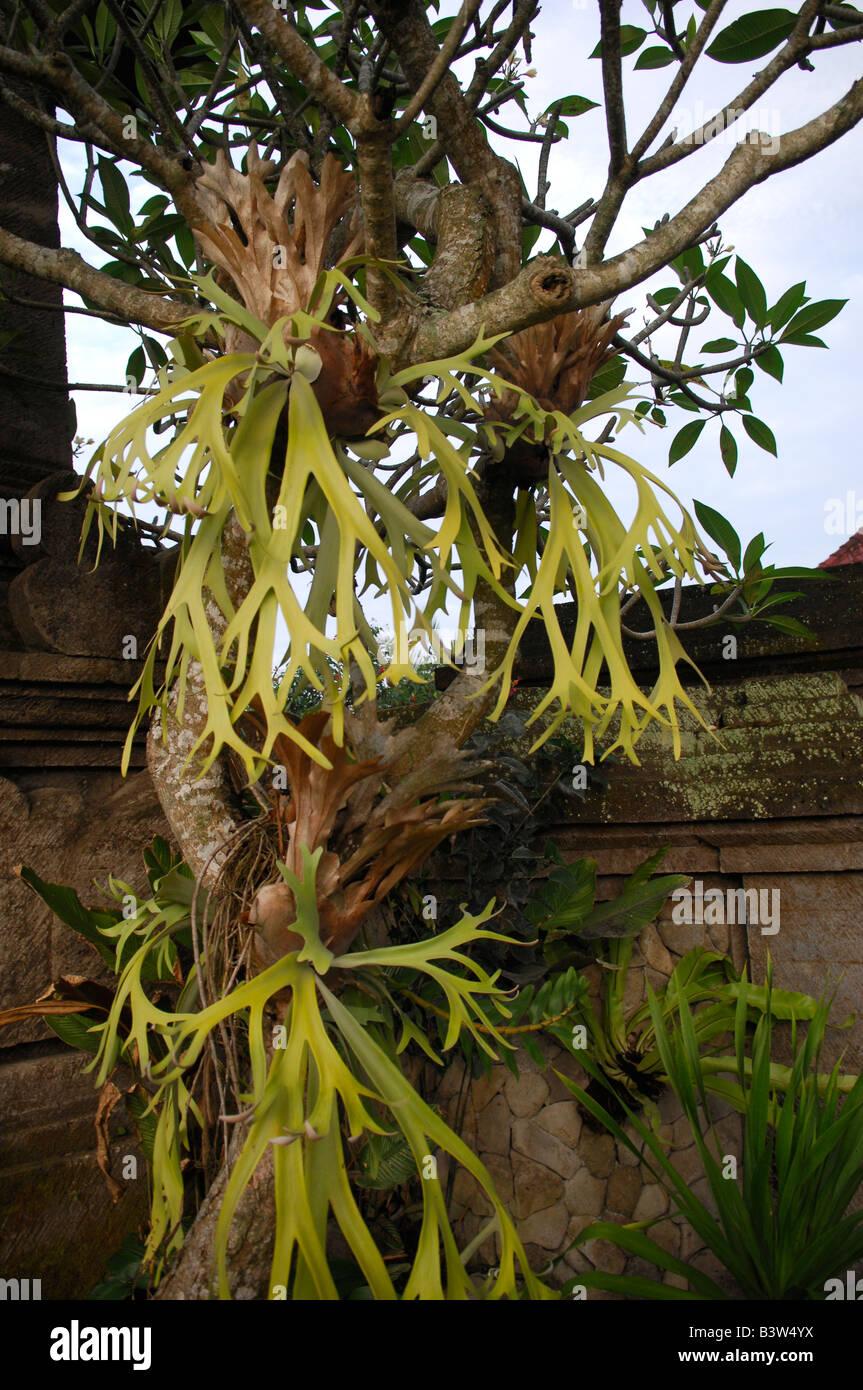 plants hanging from tree, ubud ,bali , indonesia - Stock Image