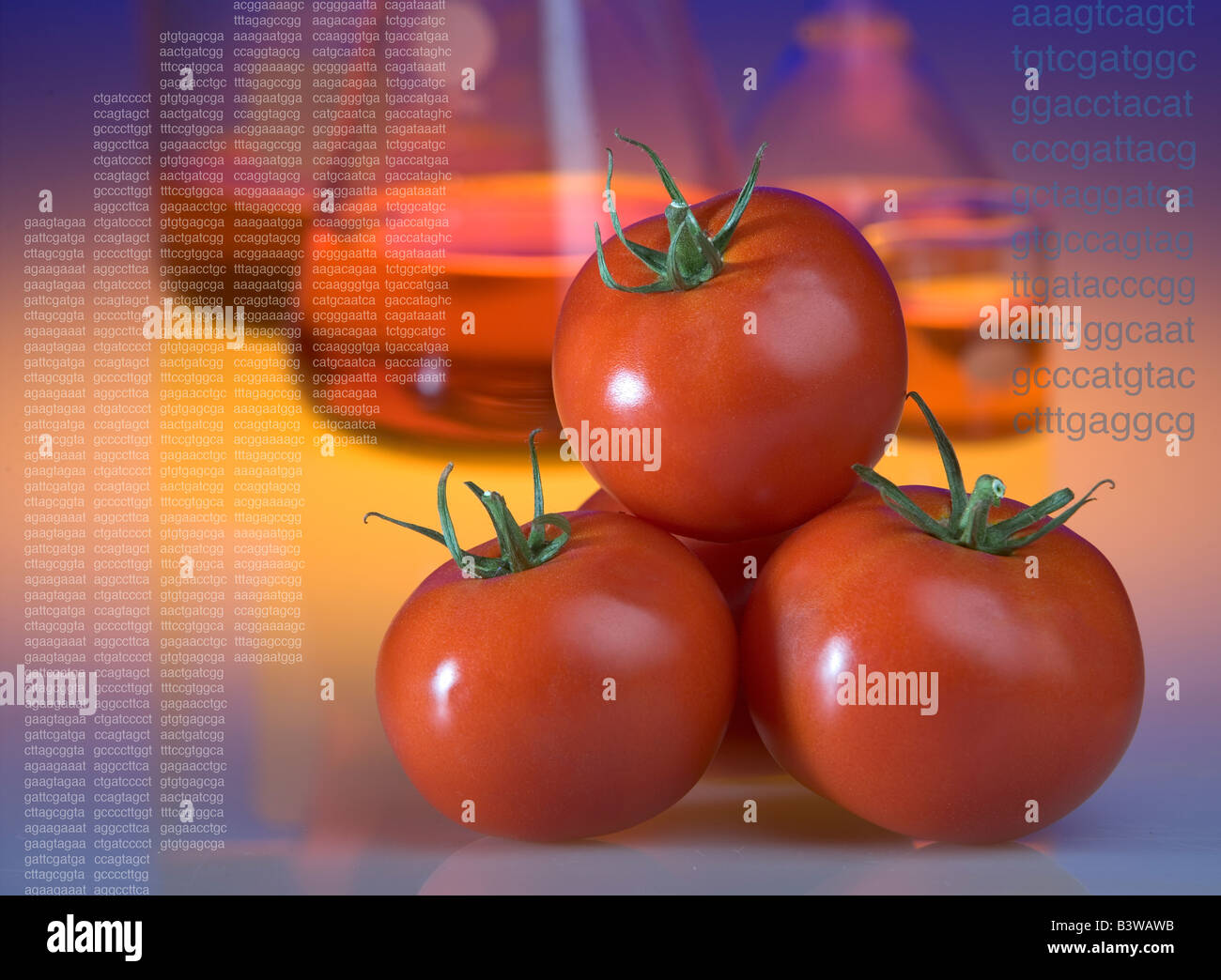 Concept shot of genetically modified tomatoes showing beakers and DNA sequence codes - Stock Image