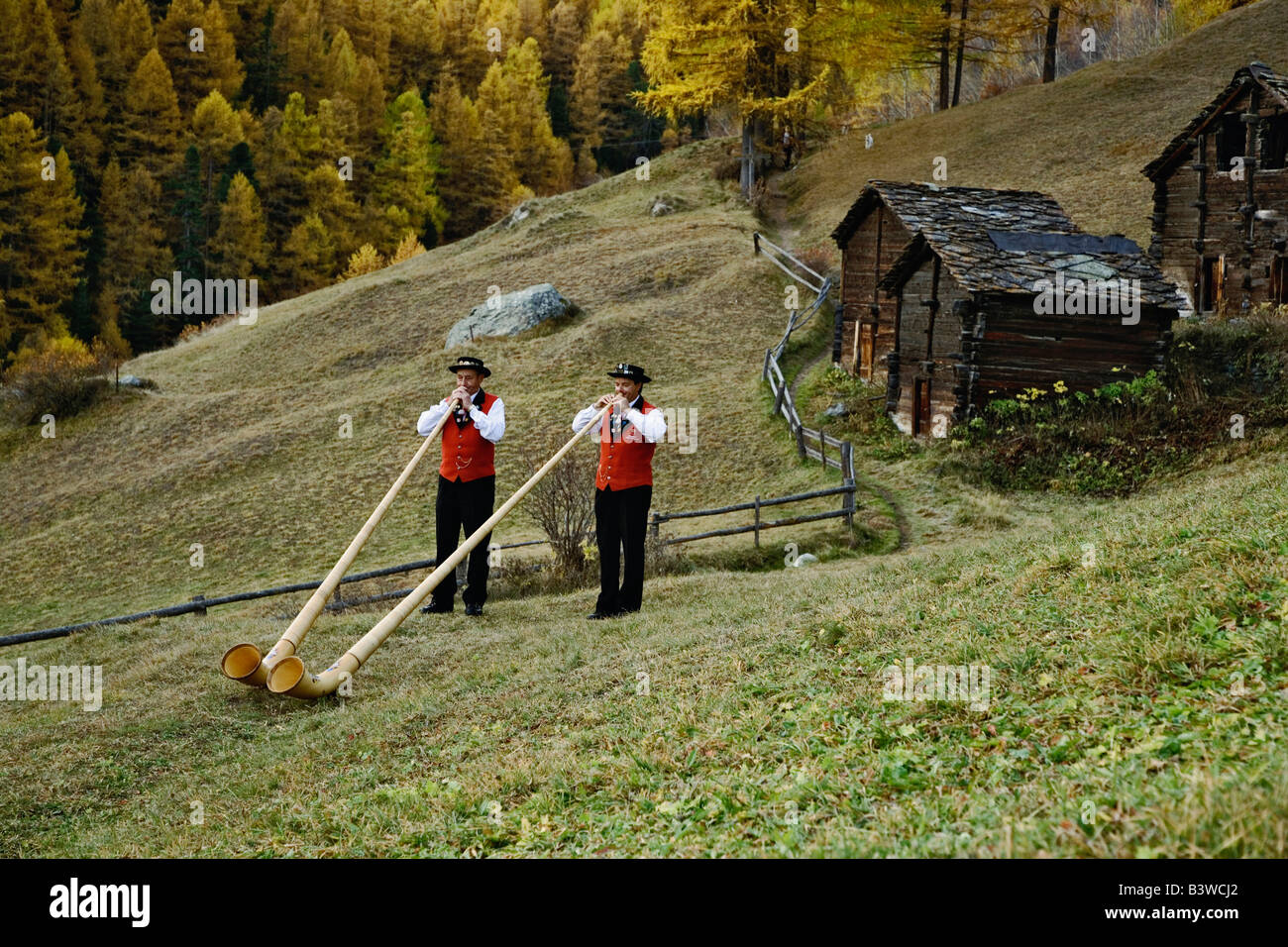 Father and son Alp Horn players and autumn Larch trees, Zermatt, Switzerland. - Stock Image
