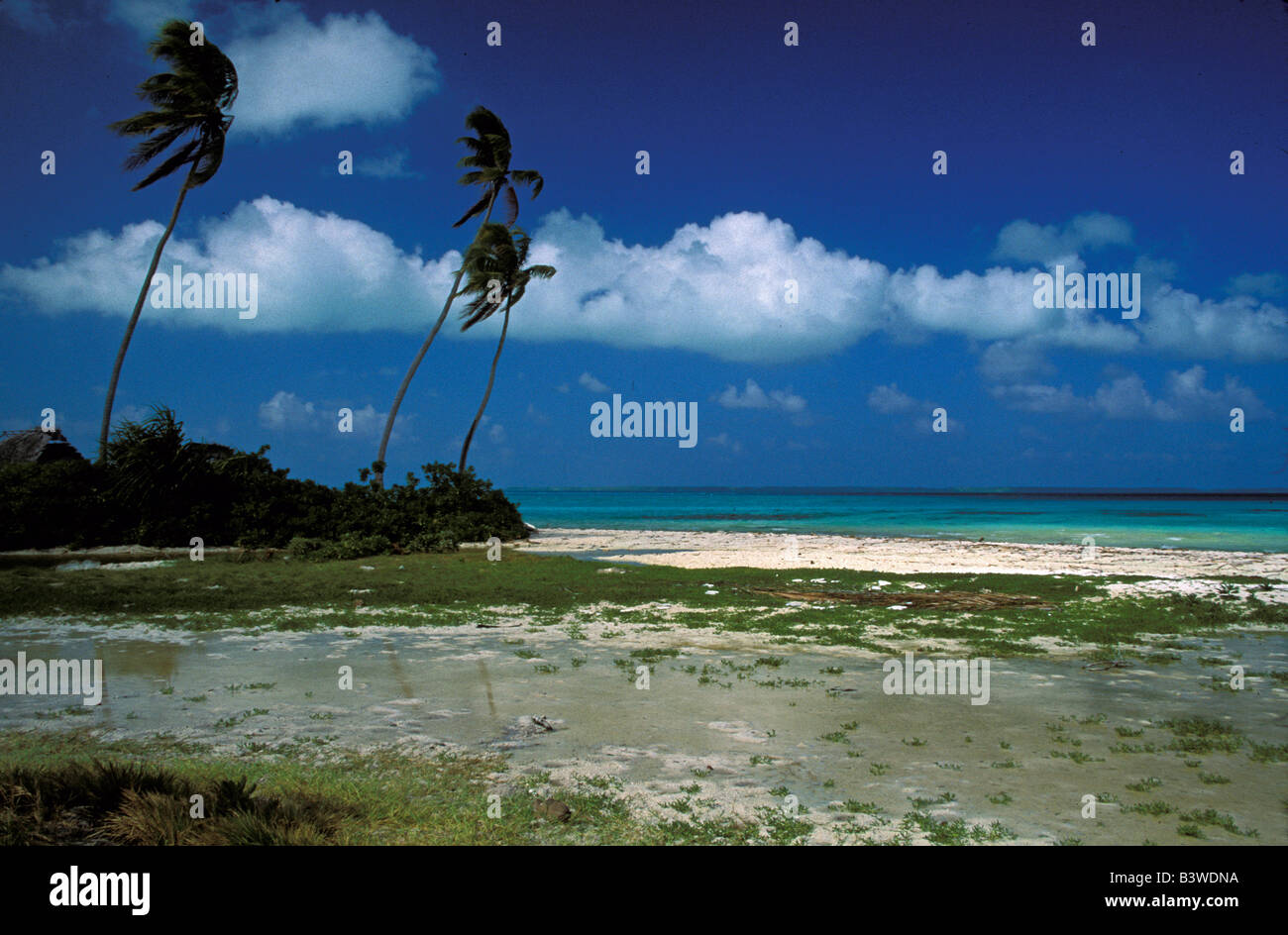 Oceania, Fanning Island, Kiribati. Lagoon with palm trees. Stock Photo