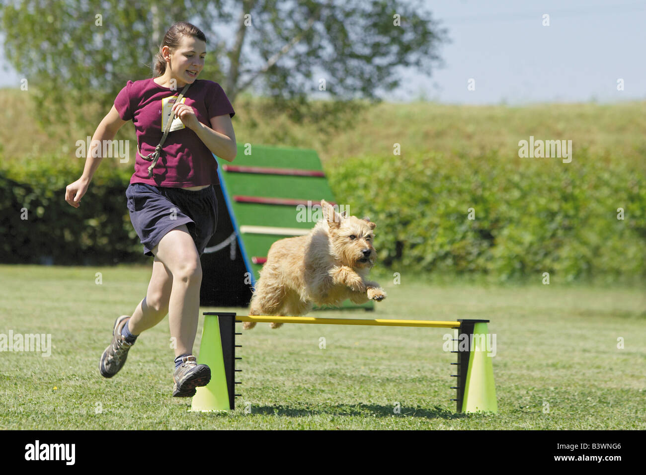 Agility: Mixed-breed dog and woman in an agility parcour - Stock Image
