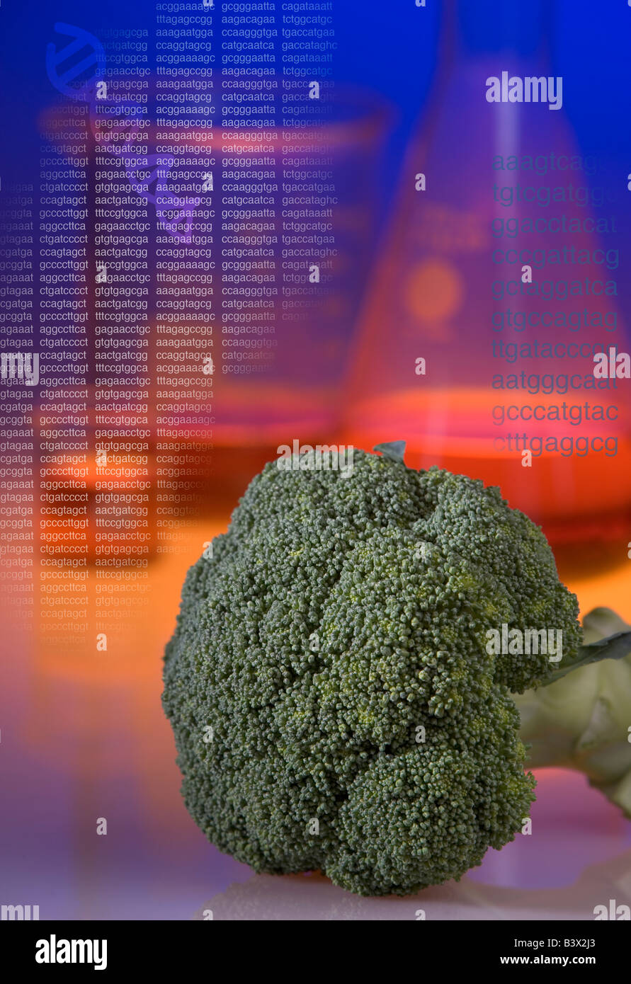 Concept shot of genetically modified broccoli showing beakers and DNA sequence codes and a helix. - Stock Image