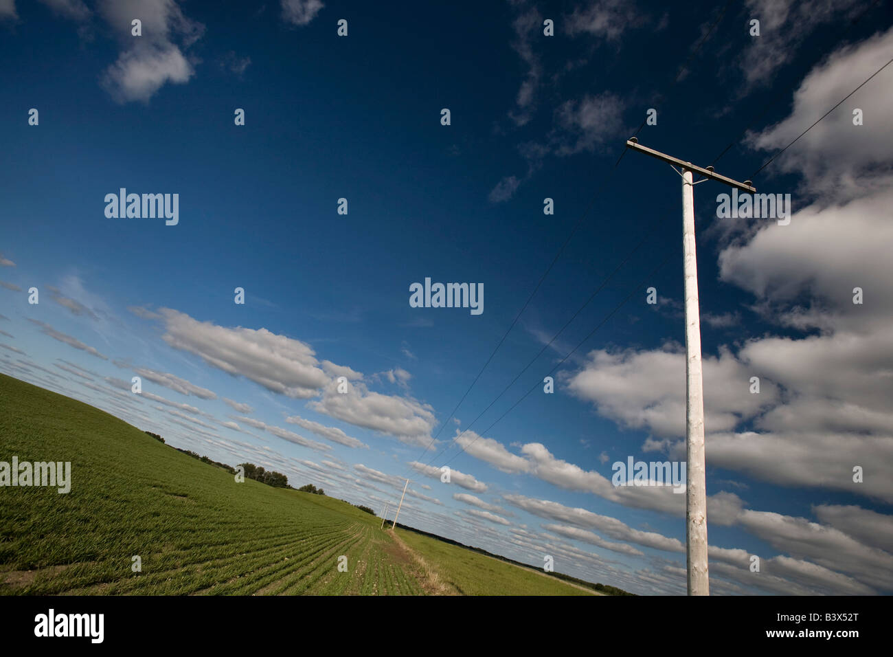 Power lines in a prairie field - Stock Image
