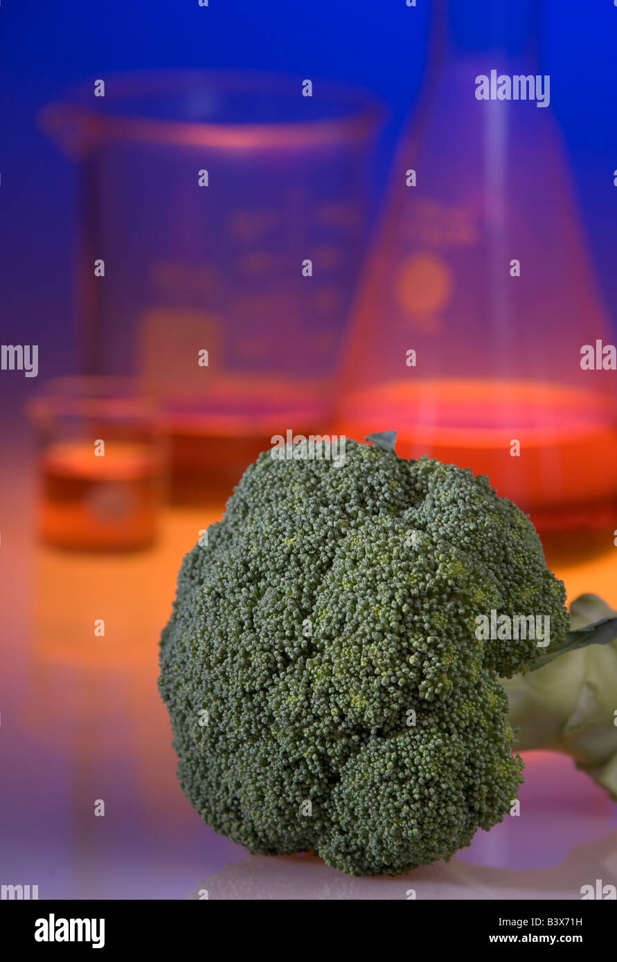 Concept shot demonstrating genetically modified broccoli Genetically modified foods are resistant to rot - Stock Image
