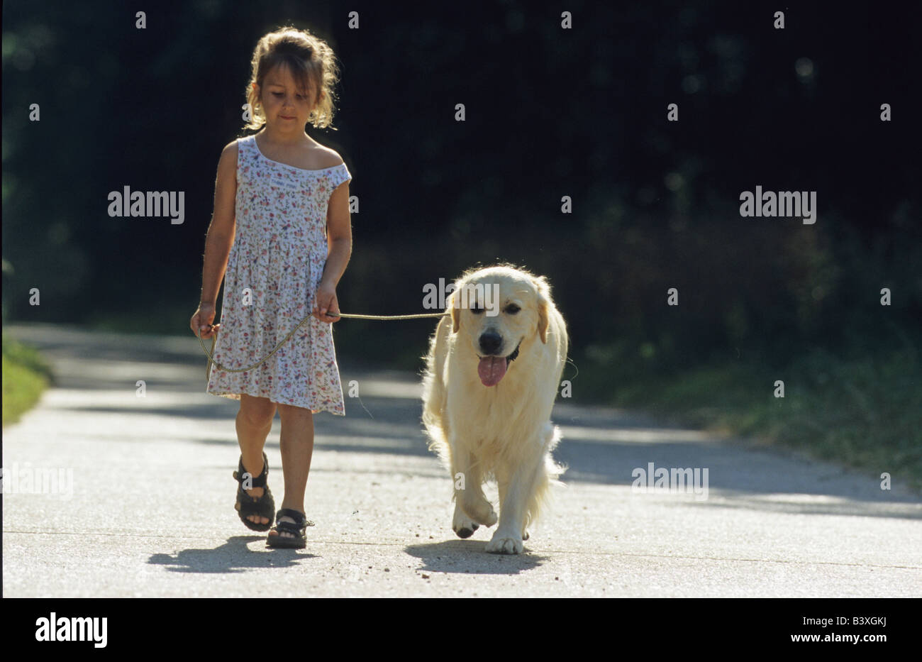 Golden Retriever (Canis lupus familiaris), on a lead walking with a little girl down a path - Stock Image