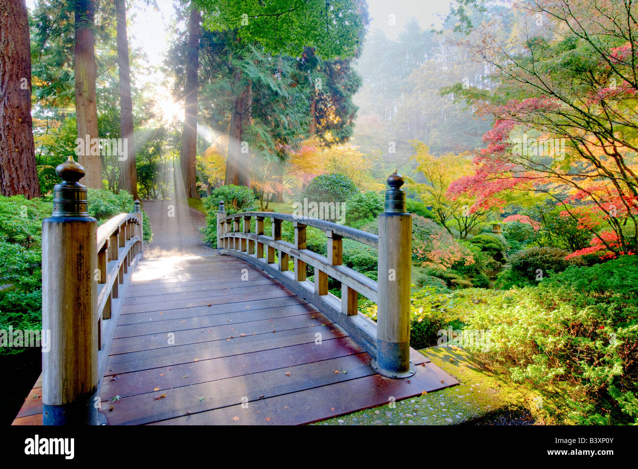 Bridge sun rays through fog and fall colored japanese maples Portland Japanese Gardens Portland Oregon - Stock Image