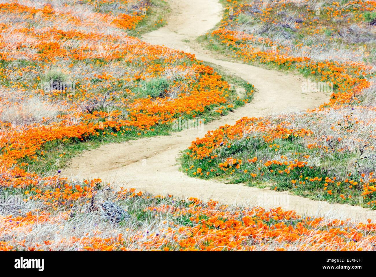 Path through Antelope Valley Poppy Preserve California - Stock Image