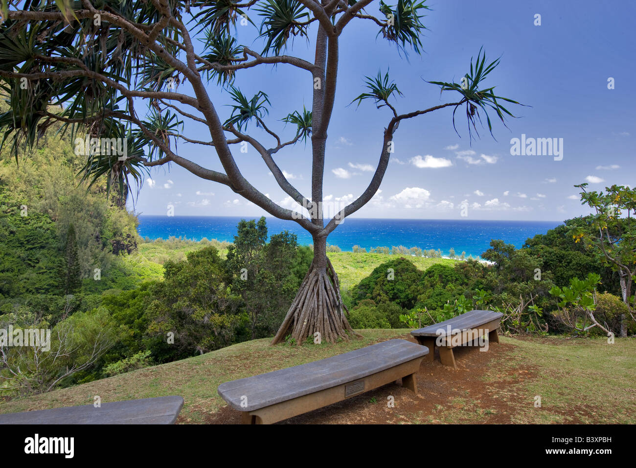 Hala Pandanus tectorius and benches Limahuli Garden Kauai Hawaii - Stock Image