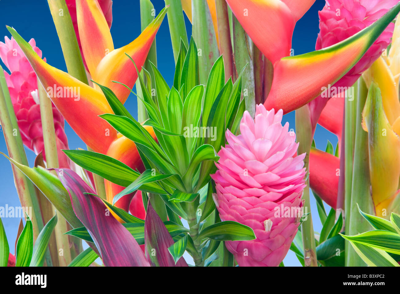 Tropical flower arrangement Heliconia and ginger Kauai Hawaii - Stock Image