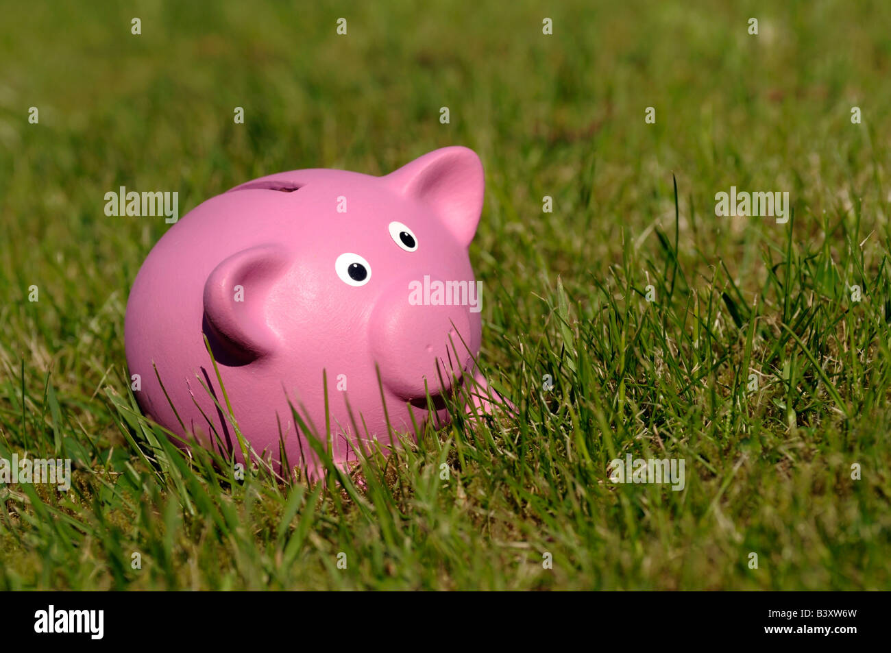 Pink piggy bank in long grass - Stock Image