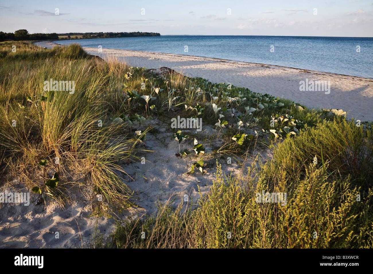 The deserted beach at Feddet in evening light, Zealand, Denmark - Stock Image