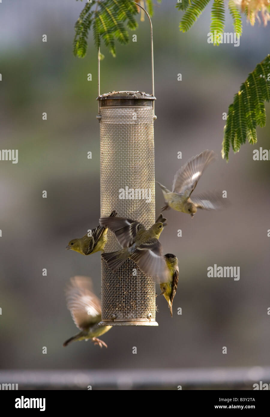 birds amy goldfinch s thistle finch feeders feeder tag