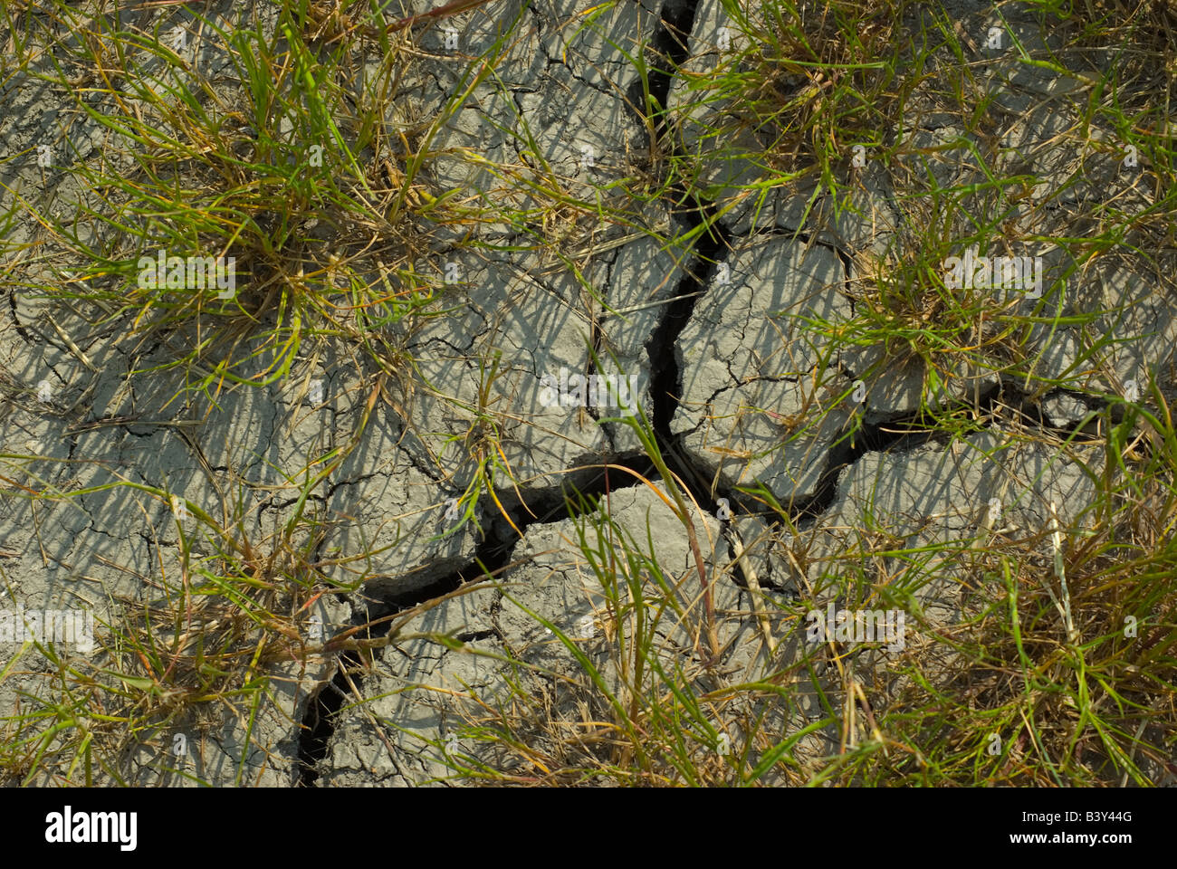 Dried soil - Stock Image