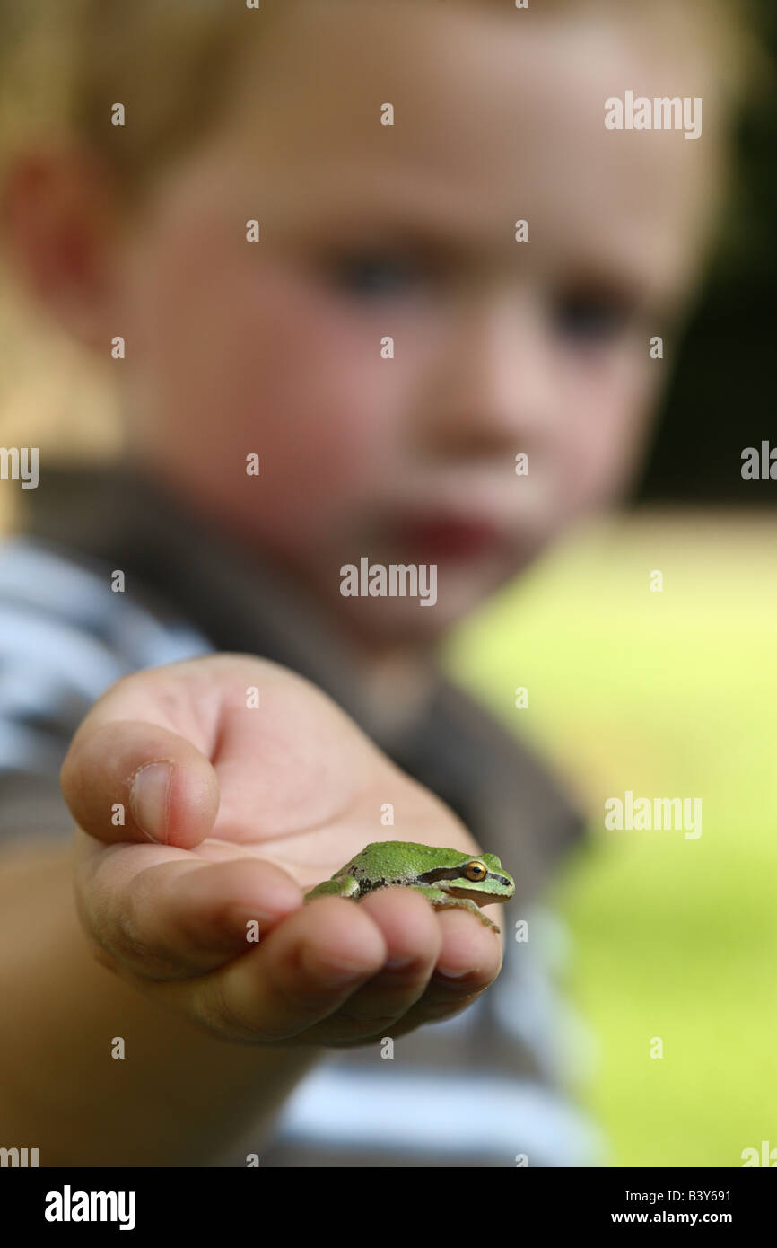 Young boy holding small tree frog Stock Photo
