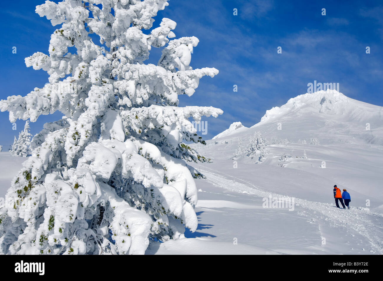 Couple walking on trail in snow at Timberline Lodge with Mt Hood Oregon - Stock Image
