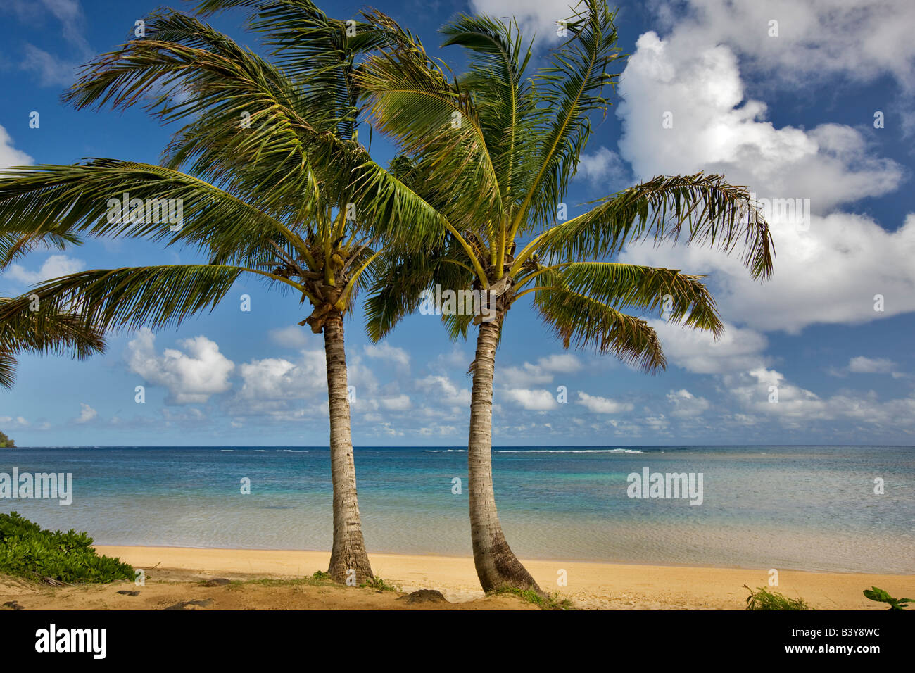 Two palm trees at Anini Beach Kauai Hawaii - Stock Image