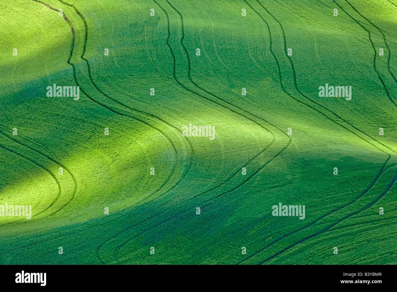 Dappled sunlight on wheat field with tractor tracks The Palouse Washington - Stock Image