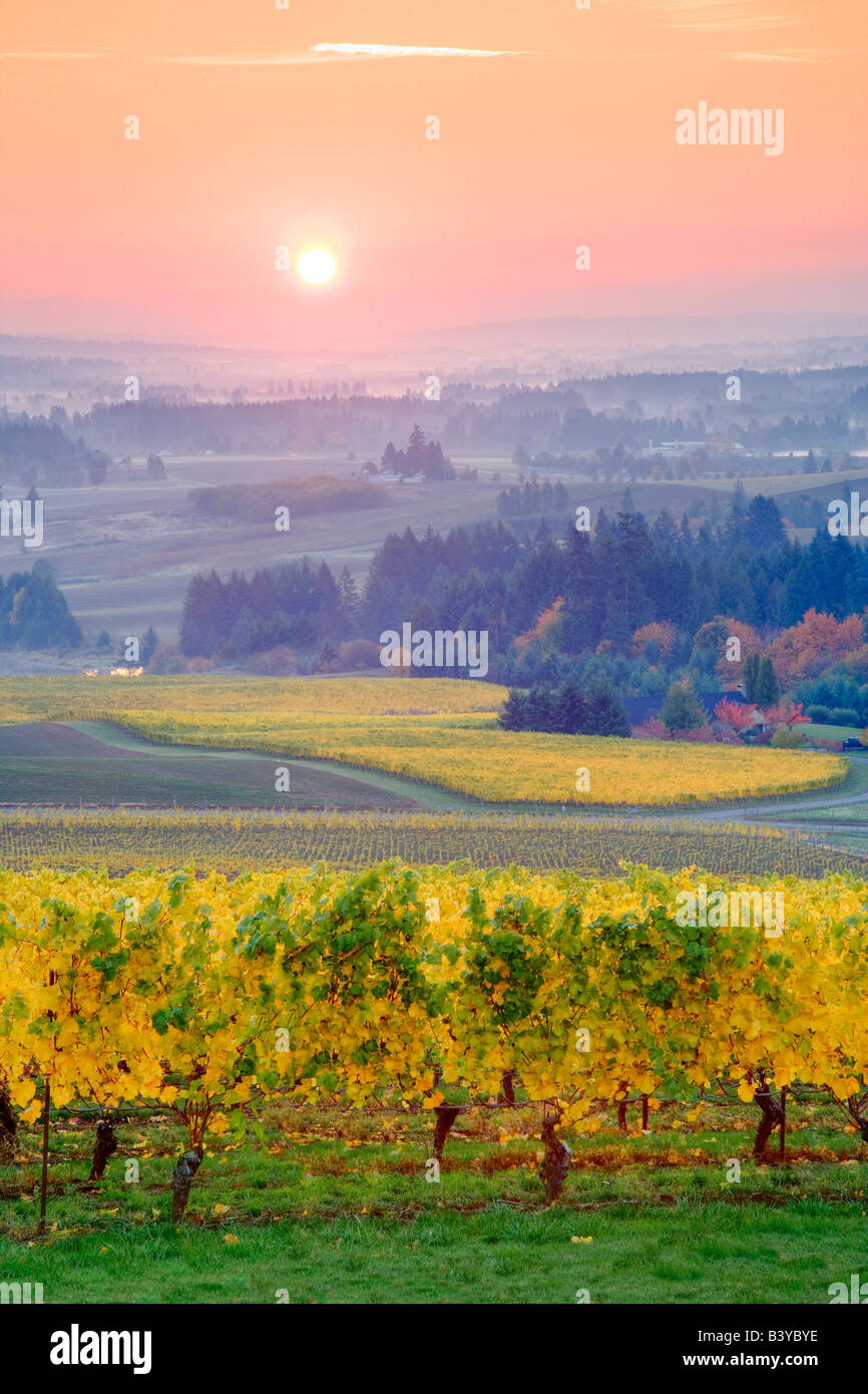 Five Mountains Vineyard with fall color and sunrise Oregon - Stock Image